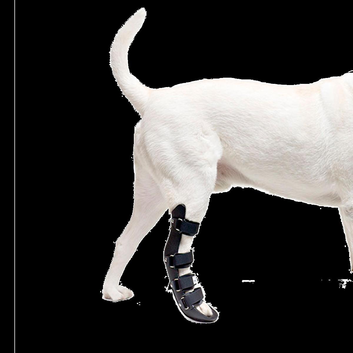 Veterinary splints